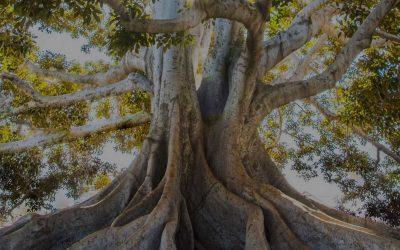 Comment créer une arborescence optimisée SEO pour son site internet ?
